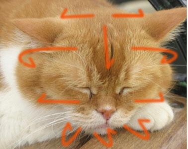 猫の健康グルーミングのやり方
